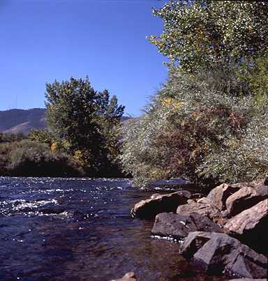 Colorado fishing travel guide best fishing in colorado for Clear creek fishing
