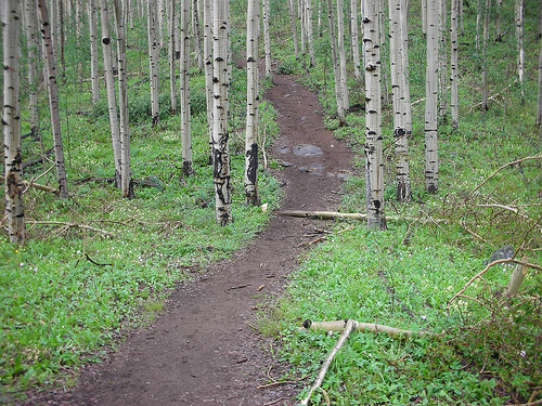 Mount Elbert Forest Trail
