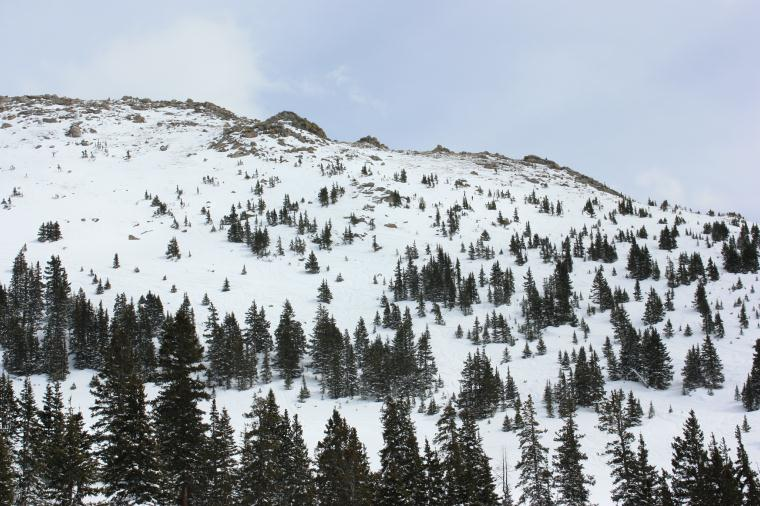 Montezuma Bowl tree runs