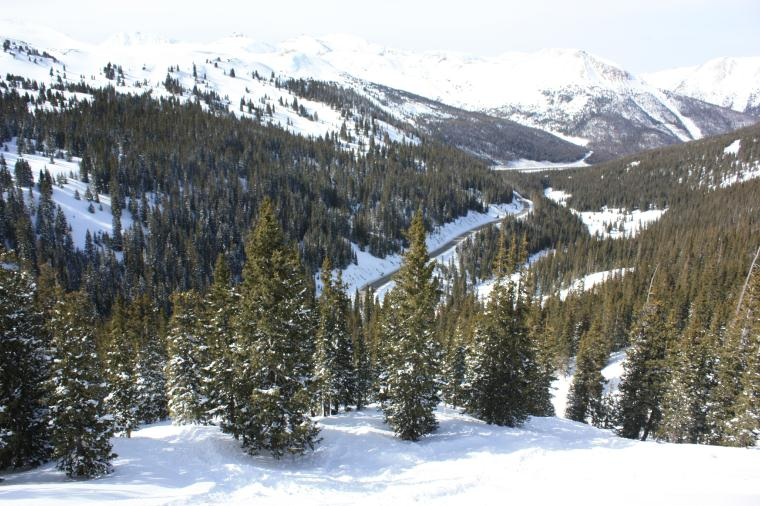 Loveland Pass back country trees